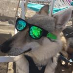 vacanze con il tuo lupo cecoslovacco