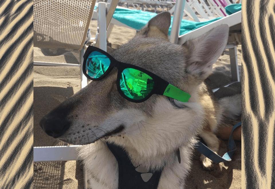 vacanze-con-il-tuo-lupo-eccoslovacco